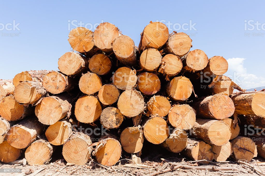 Wood Trees Logs Stacks stock photo