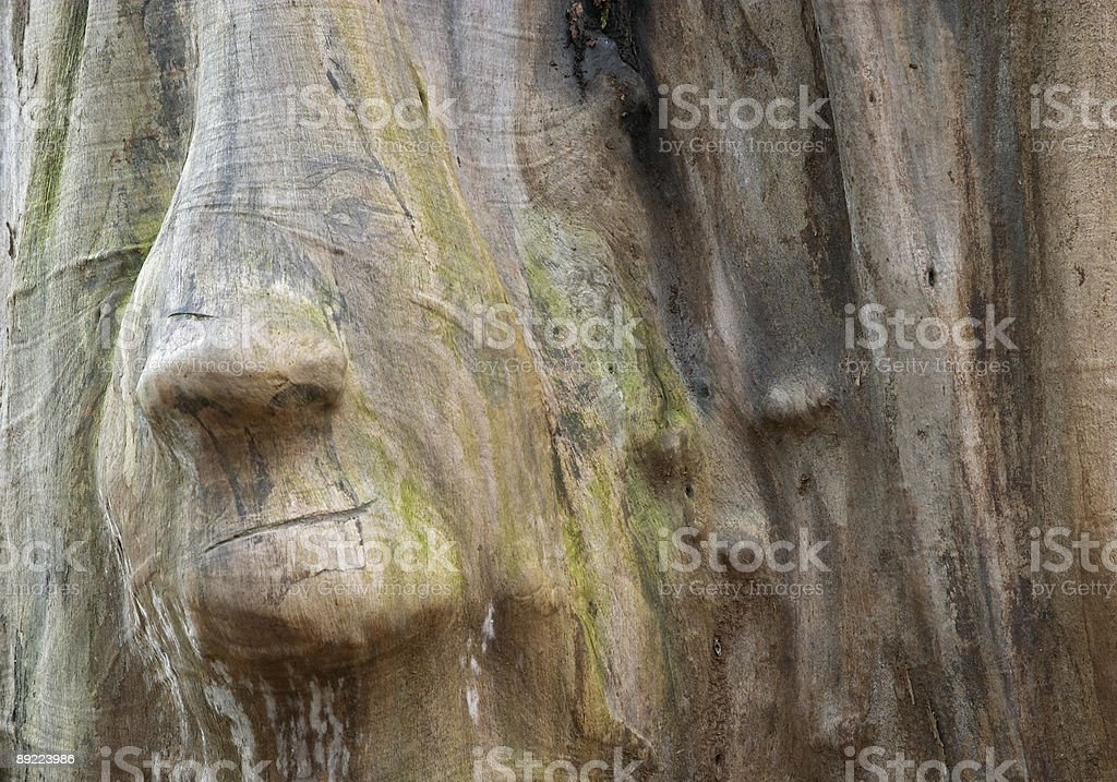 Wood trunk with face shape royalty-free stock photo