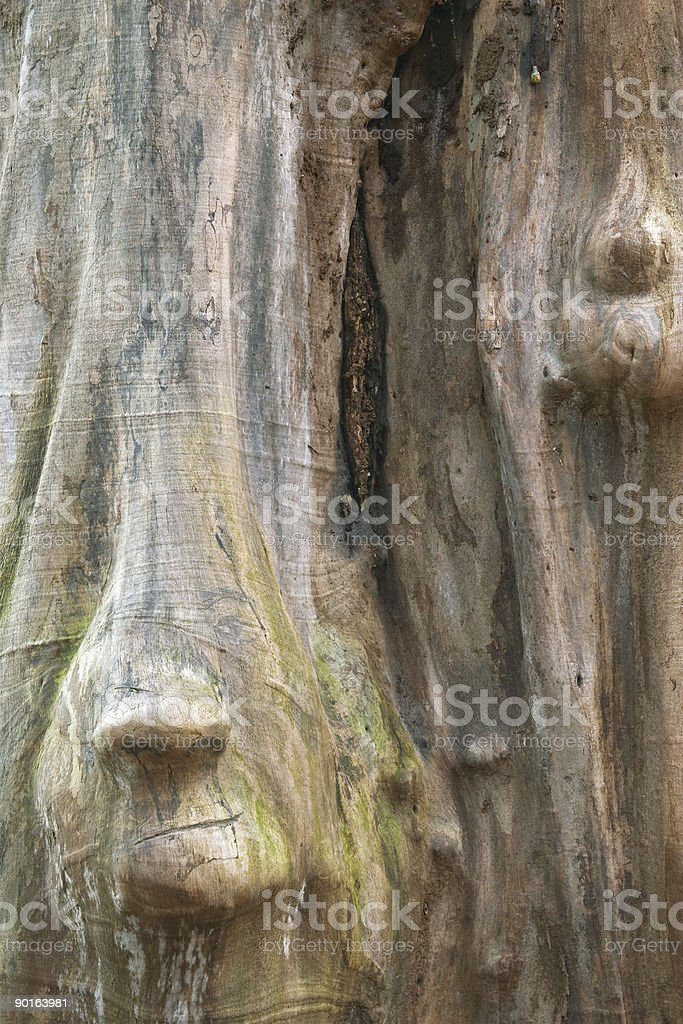 Wood trunk with face shape, Sweden royalty-free stock photo