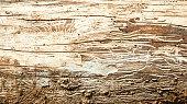 Wood with bark beetle galleries
