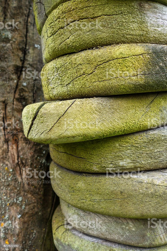 Wood with green growth stock photo