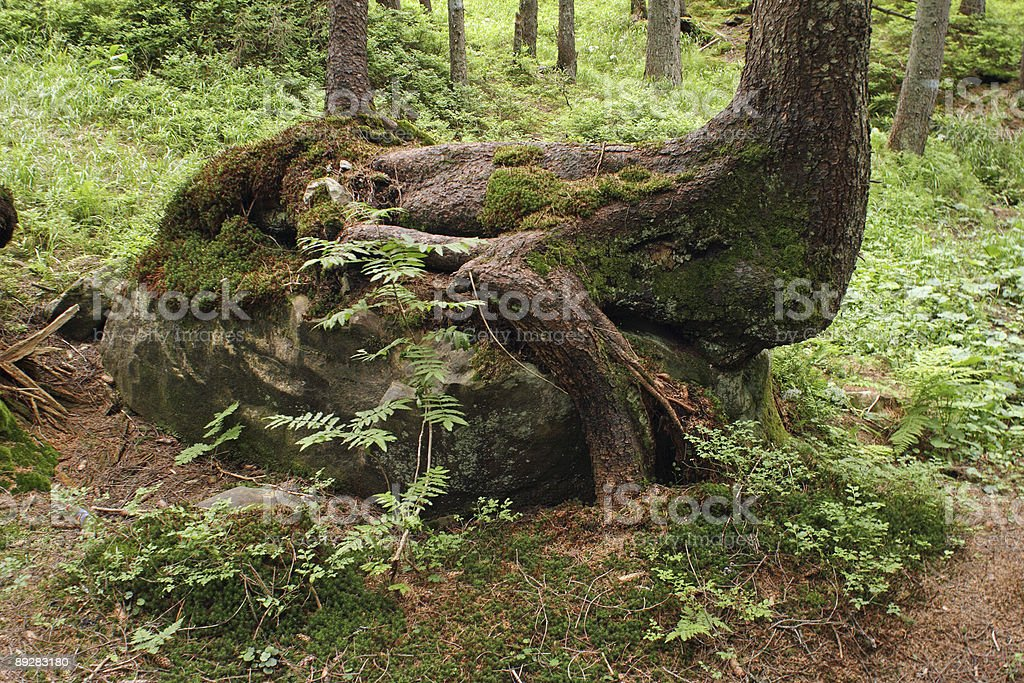 wood-animal stock photo