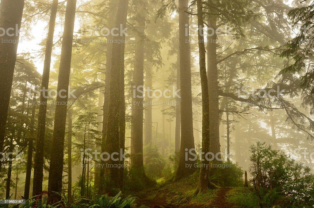 Лесной тропинке прибрежной через Туман Стоковые фото Стоковая фотография