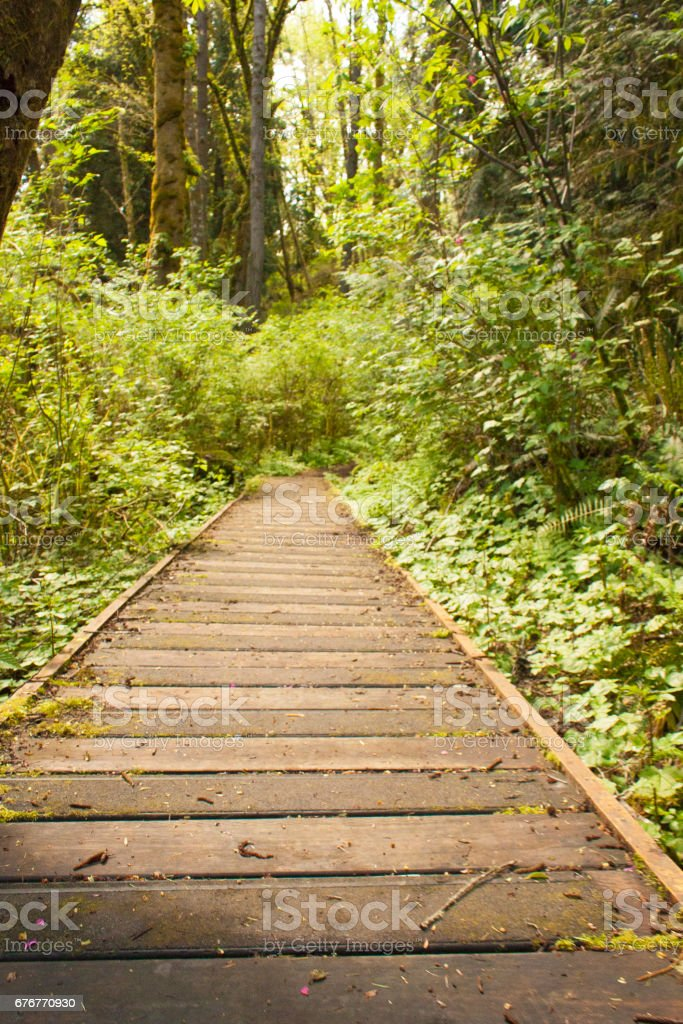 Wooded Hiking Path stock photo