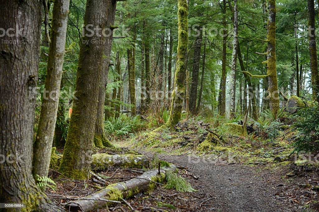 wooded hiking trail stock photo