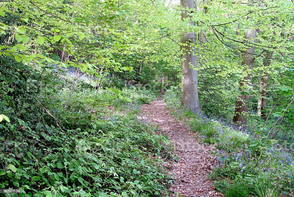 Wooded path stock photo