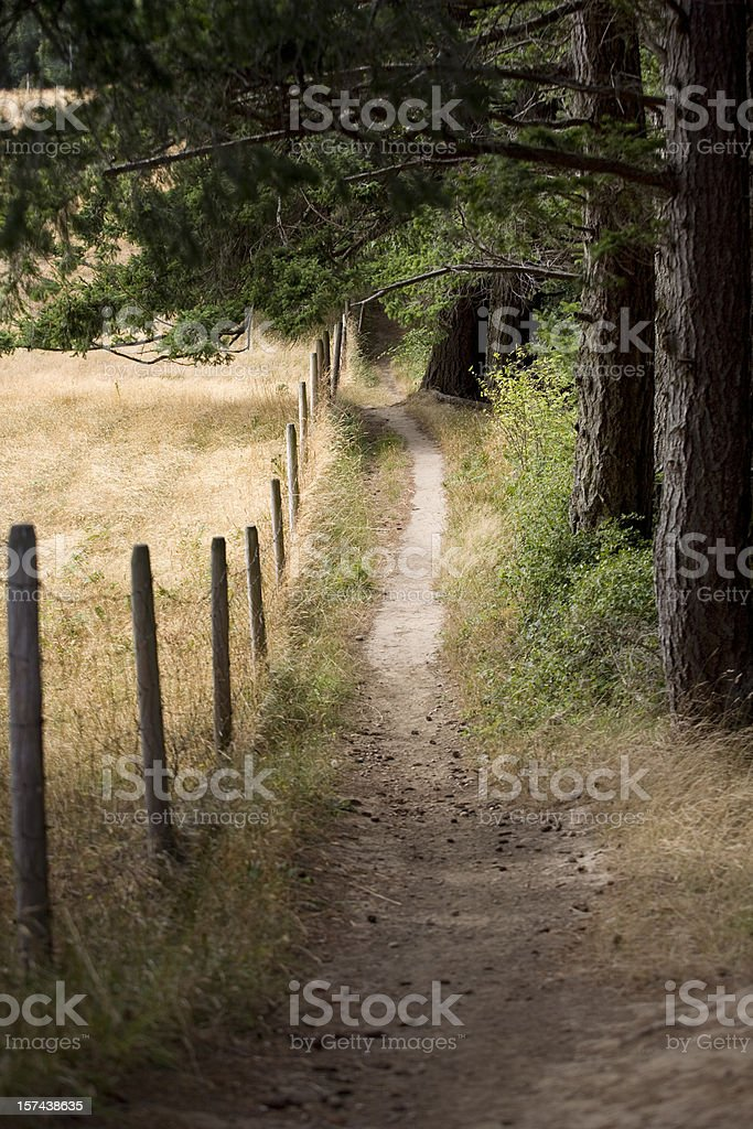 Wooded pathway royalty-free stock photo