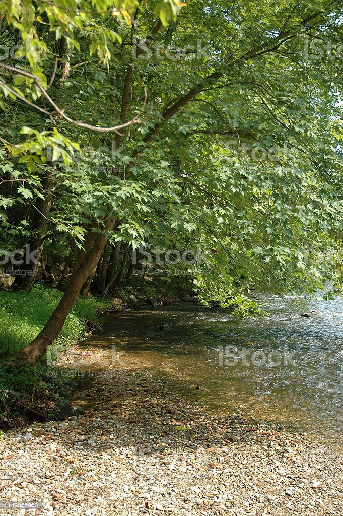 Wooded riverbank stock photo
