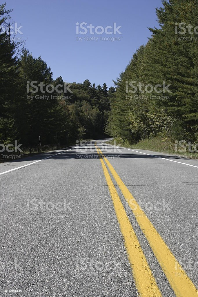 Wooded road perspective stock photo
