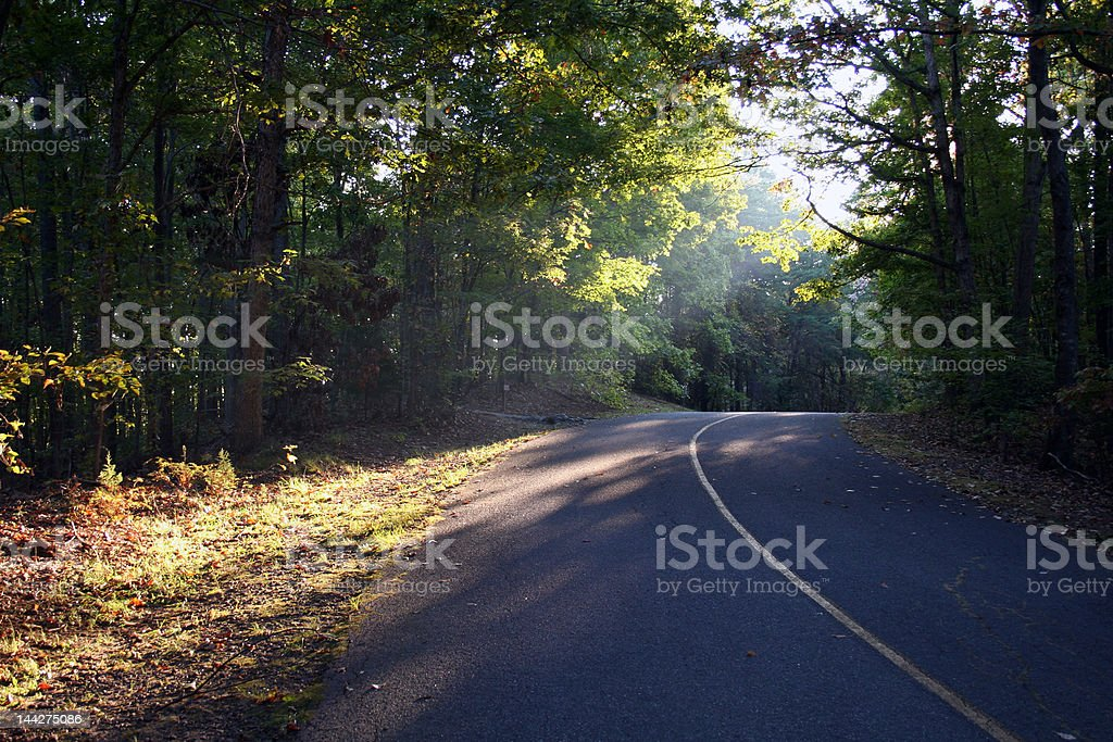 Wooded road stock photo