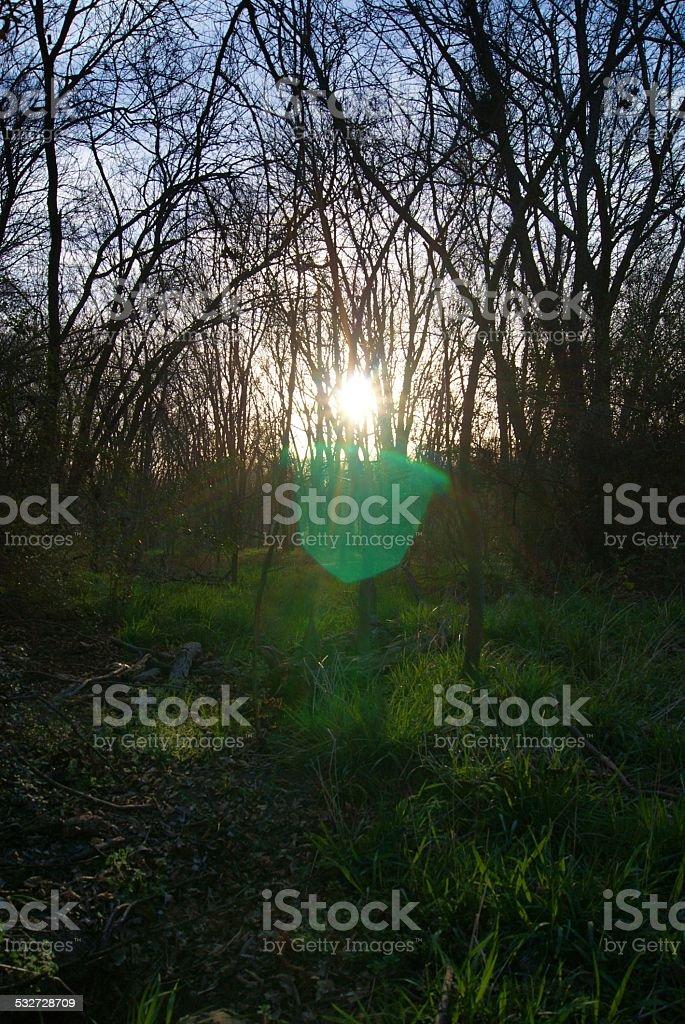 Wooded Sunrise royalty-free stock photo