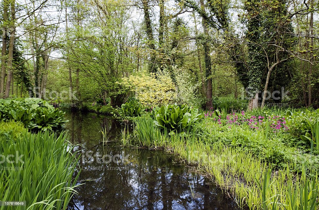 Wooded wetlands in Norfolk, England stock photo
