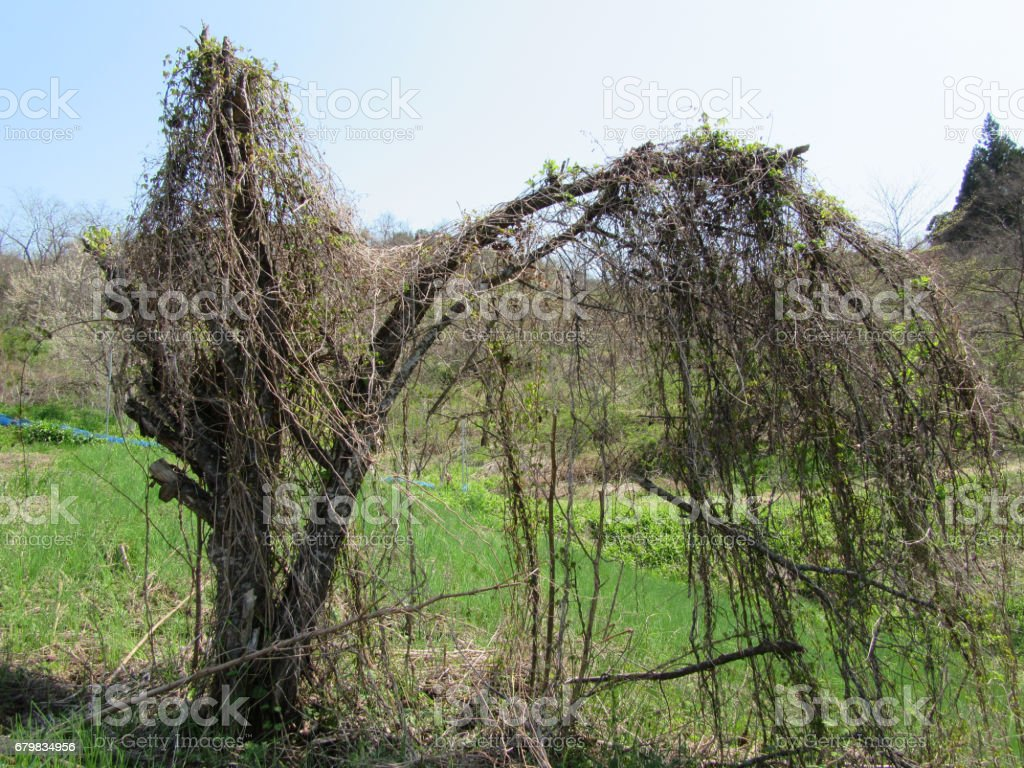 Wooden arch stock photo