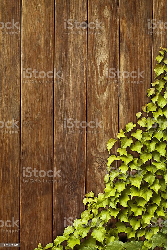 Wooden background with ivy royalty-free stock photo
