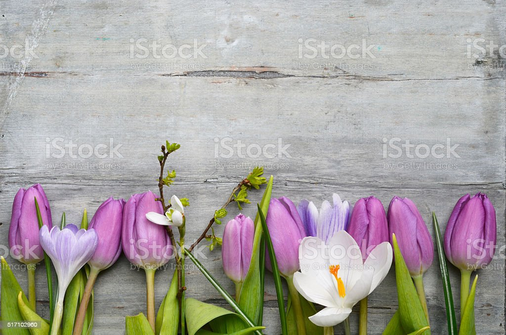 wooden background with purple tulips, crocus,snowdrop  copy space border stock photo