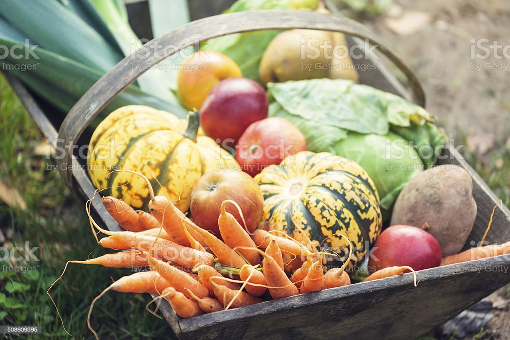 Wooden basket full of fresh, organic vegetables stock photo