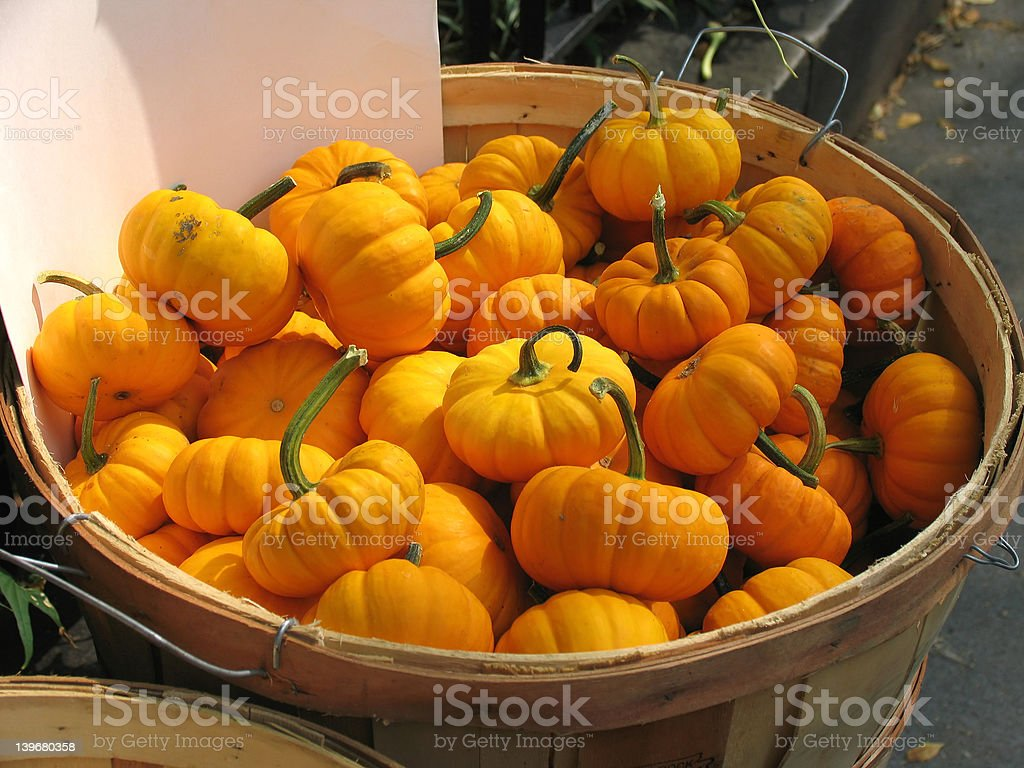 Wooden Basket of Miniature Pumpkins with Blank Sales Card royalty-free stock photo