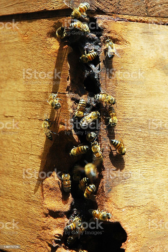 Wooden bee hive with bees stock photo
