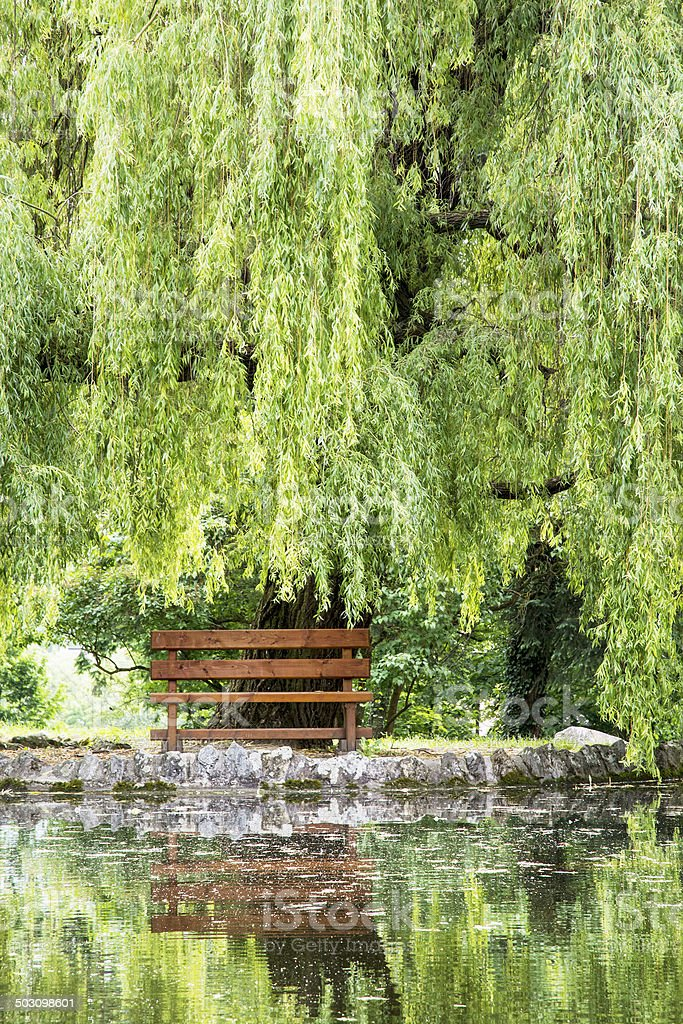 Wooden bench and weeping willow are mirrored in the lake stock photo