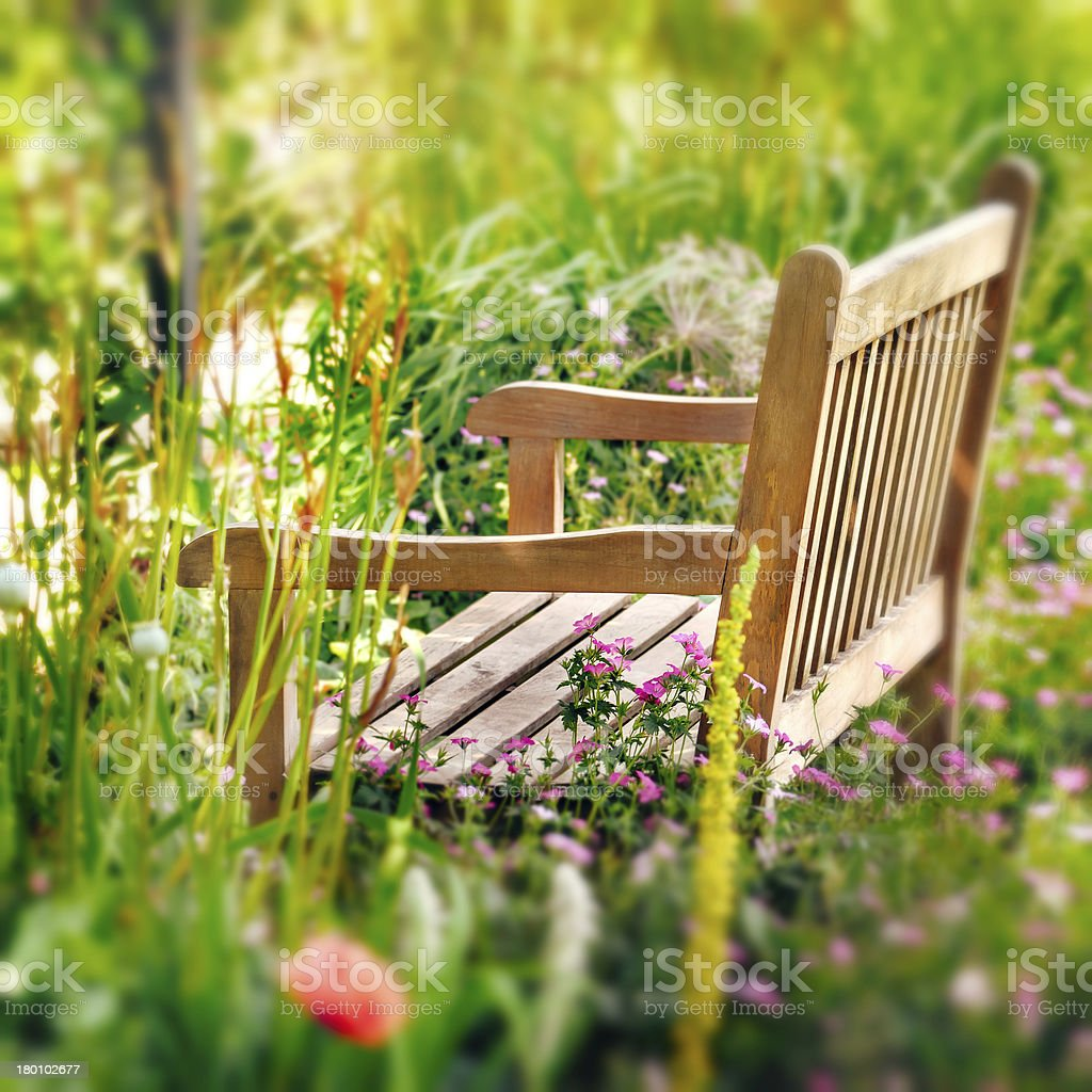 Wooden Bench in a wildflower garden. Square composition. stock photo