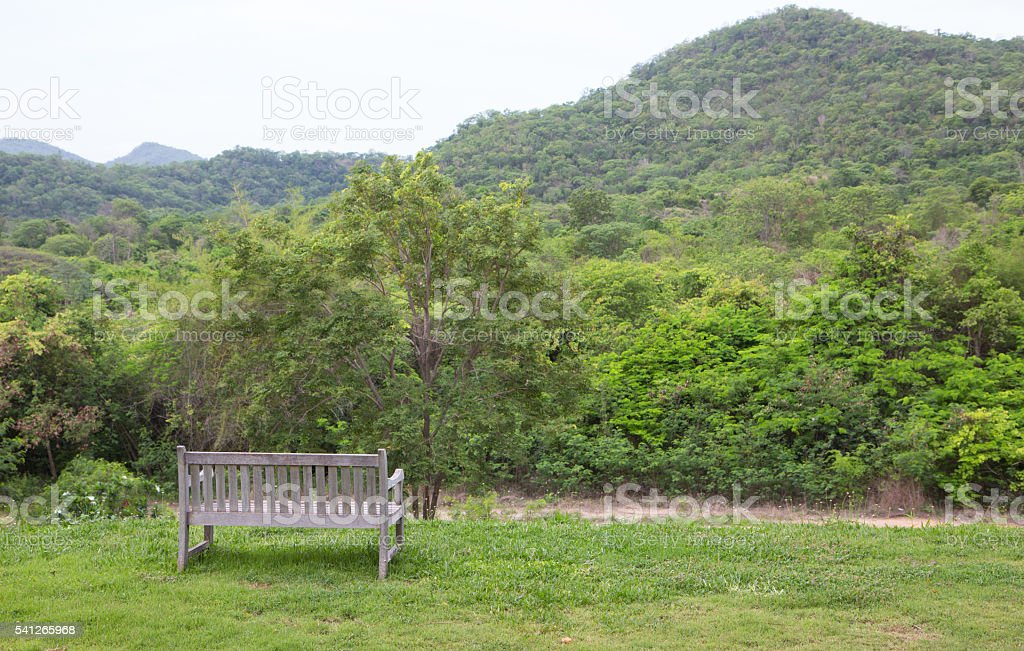 wooden bench in green garden lawn for resting and relax Стоковые фото Стоковая фотография