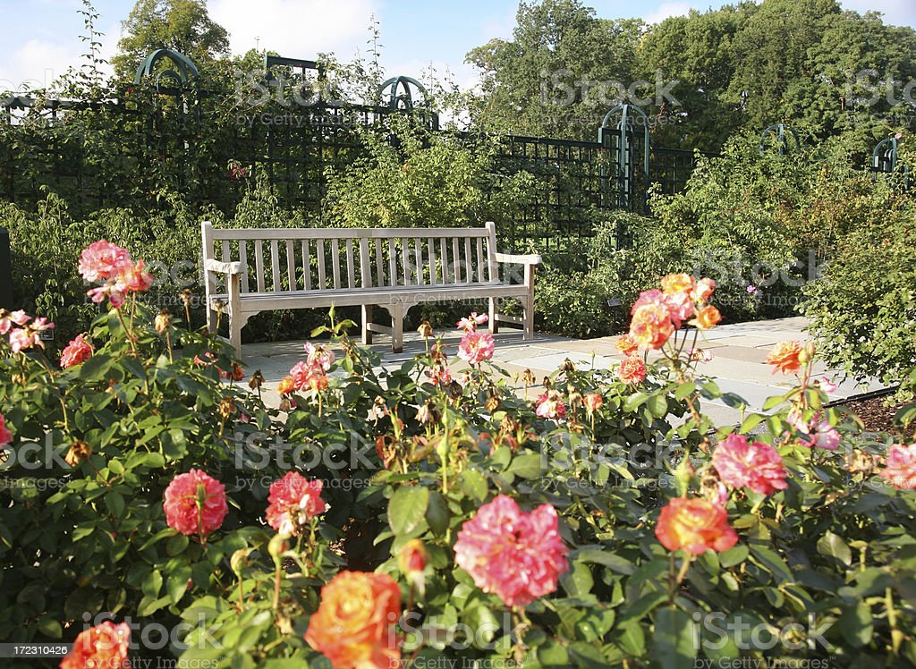 Wooden Bench In Rose Garden royalty-free stock photo