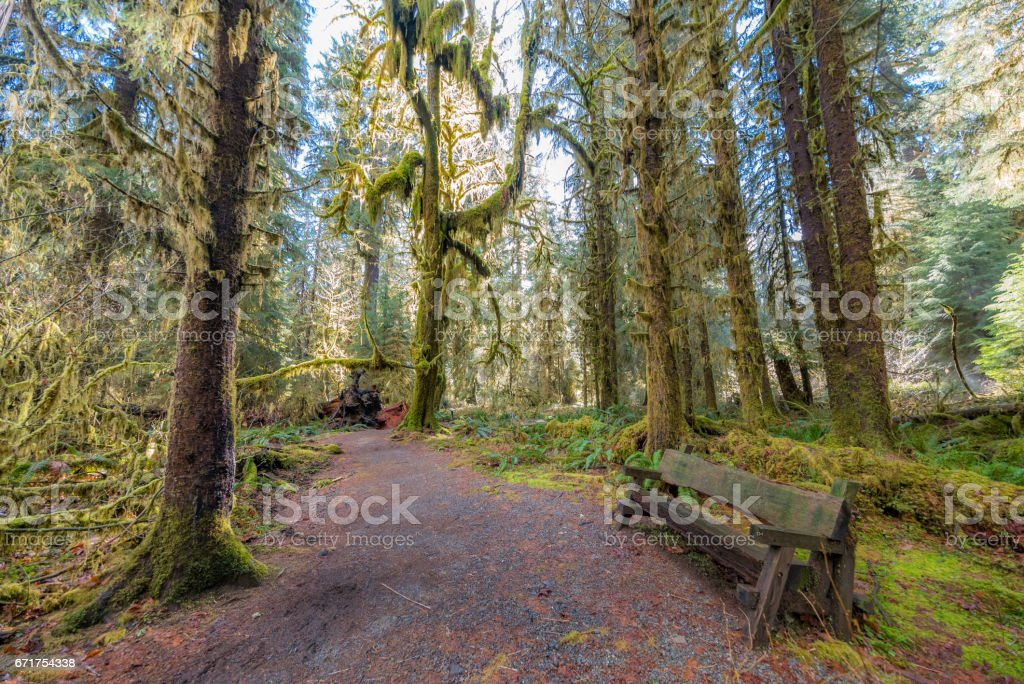 Wooden bench on a background of the rainforest. stock photo
