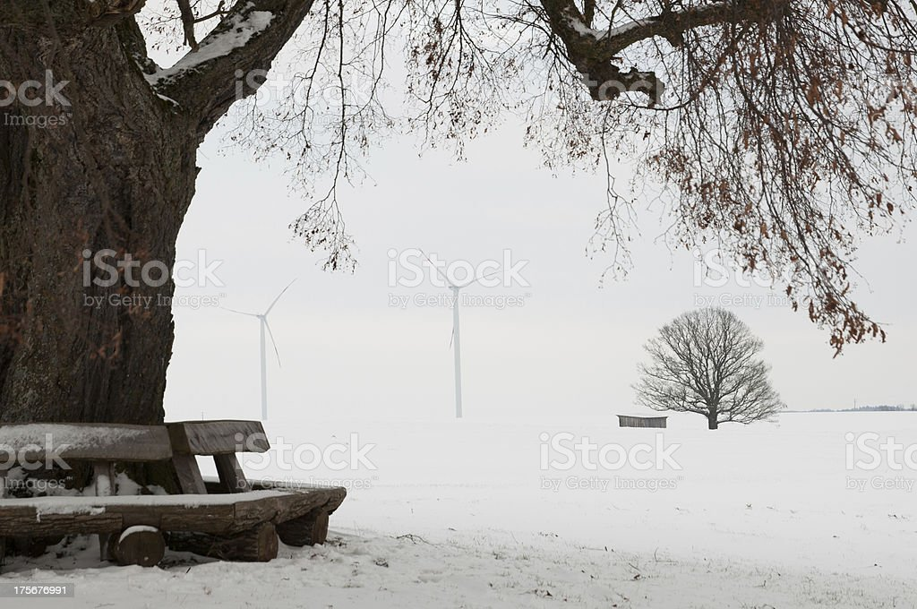 Wooden benches under a large lime tree. Winter in Germany stock photo