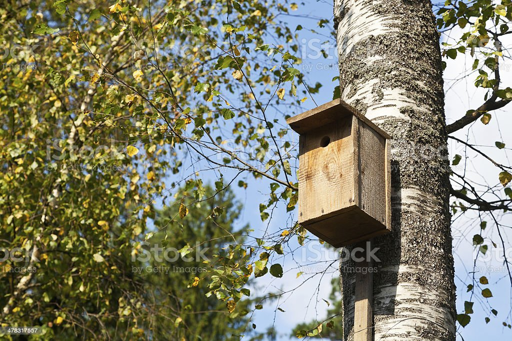 wooden birdhouse on birch royalty-free stock photo