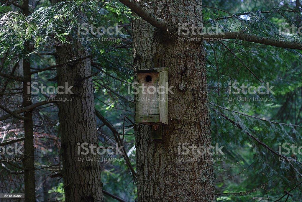 木製の鳥ハウスで、ダークな森林 ロイヤリティフリーストックフォト