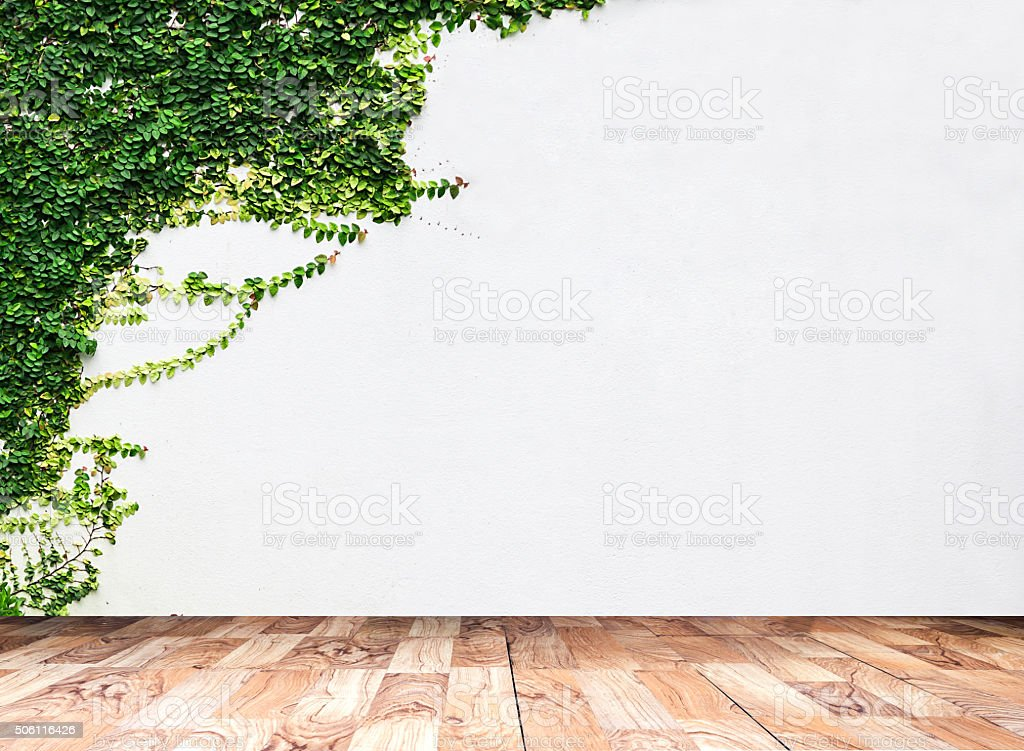 Wooden board the White wall green ivy plant. stock photo