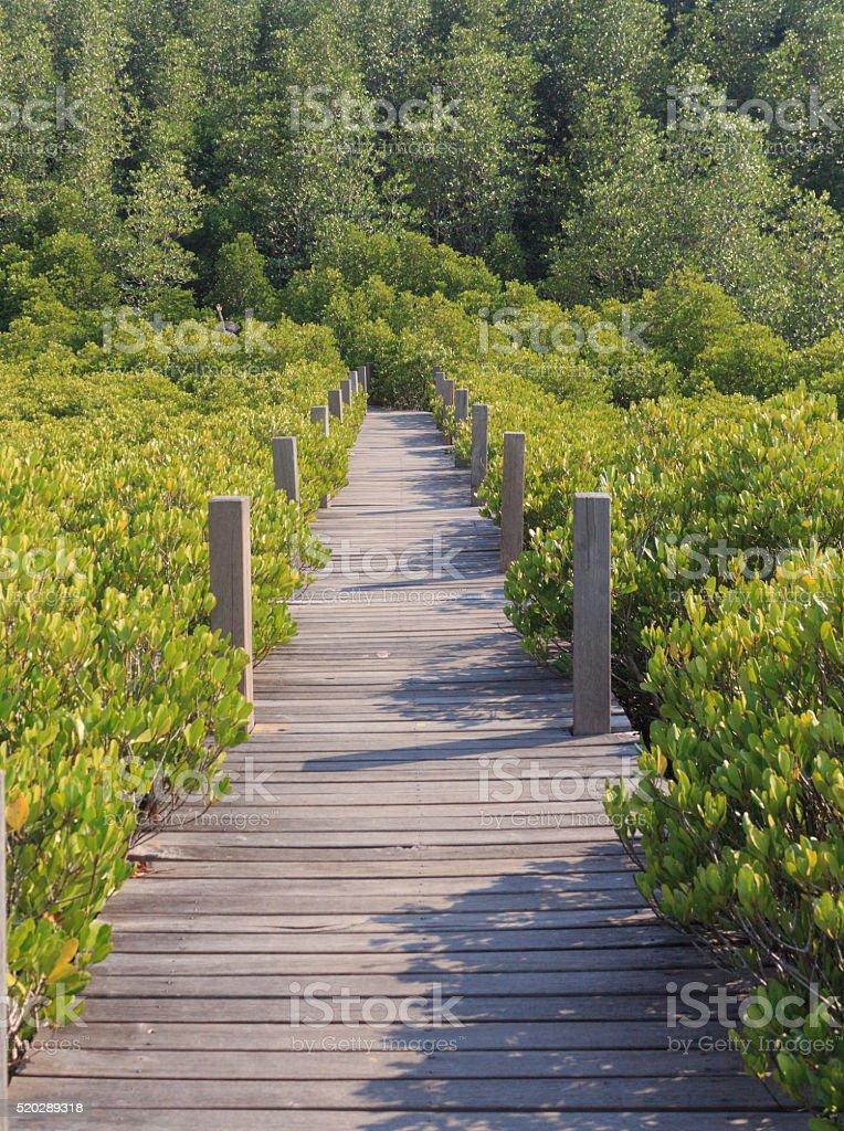 Деревянная доска ходьбы путь к месту назначения Стоковые фото Стоковая фотография