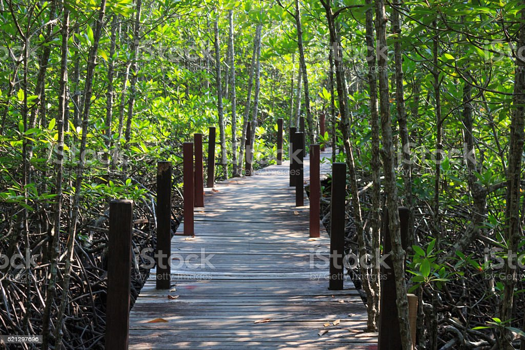 wooden board walk path leading to destination stock photo