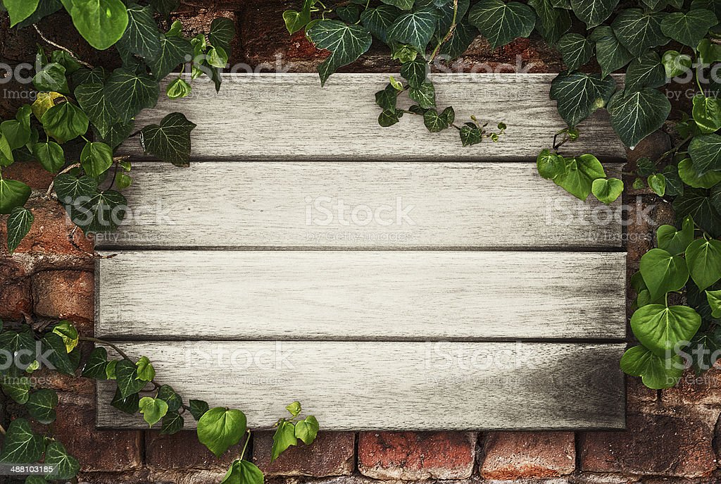 Wooden boards framed by ivy stock photo