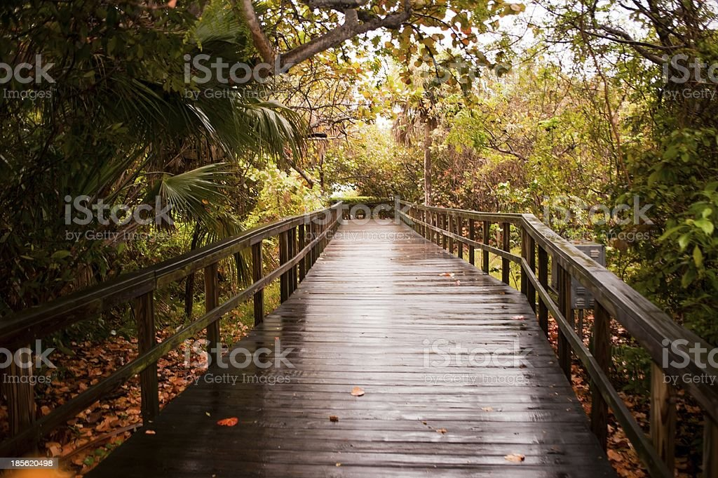 Wooden Boardwalk After the Rain stock photo