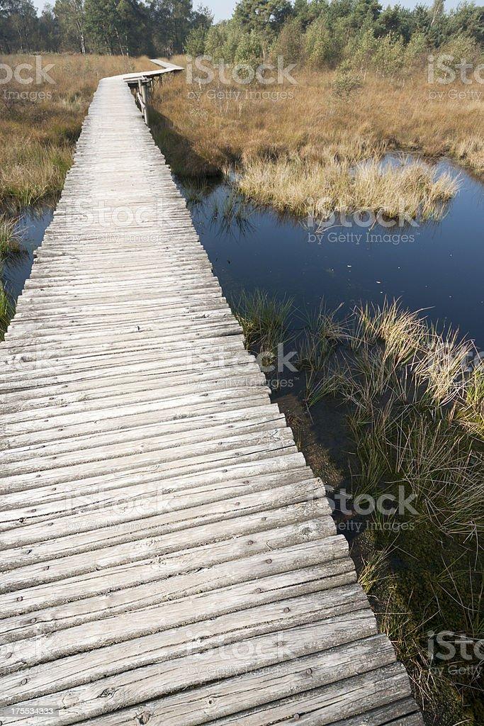 Wooden boardwalk in De Groote Peel swamp, The Netherlands stock photo