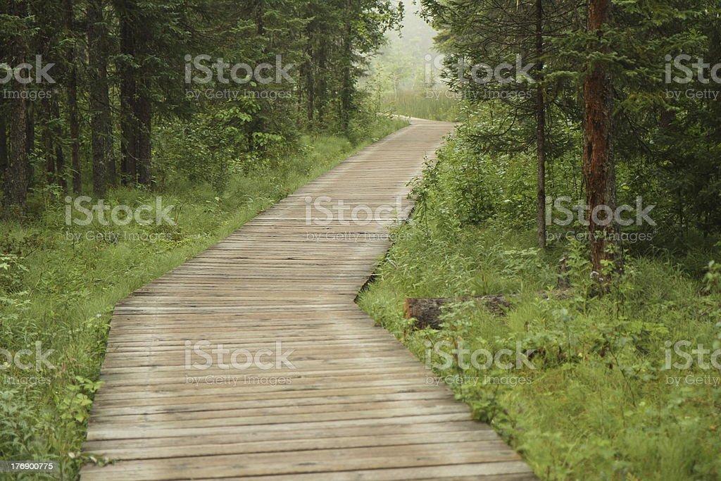 wooden boardwalk in rain-forest stock photo