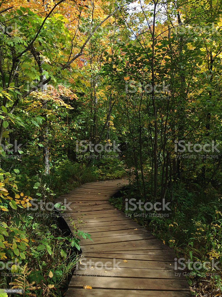 Wooden Boardwalk Through the Trees royalty-free stock photo