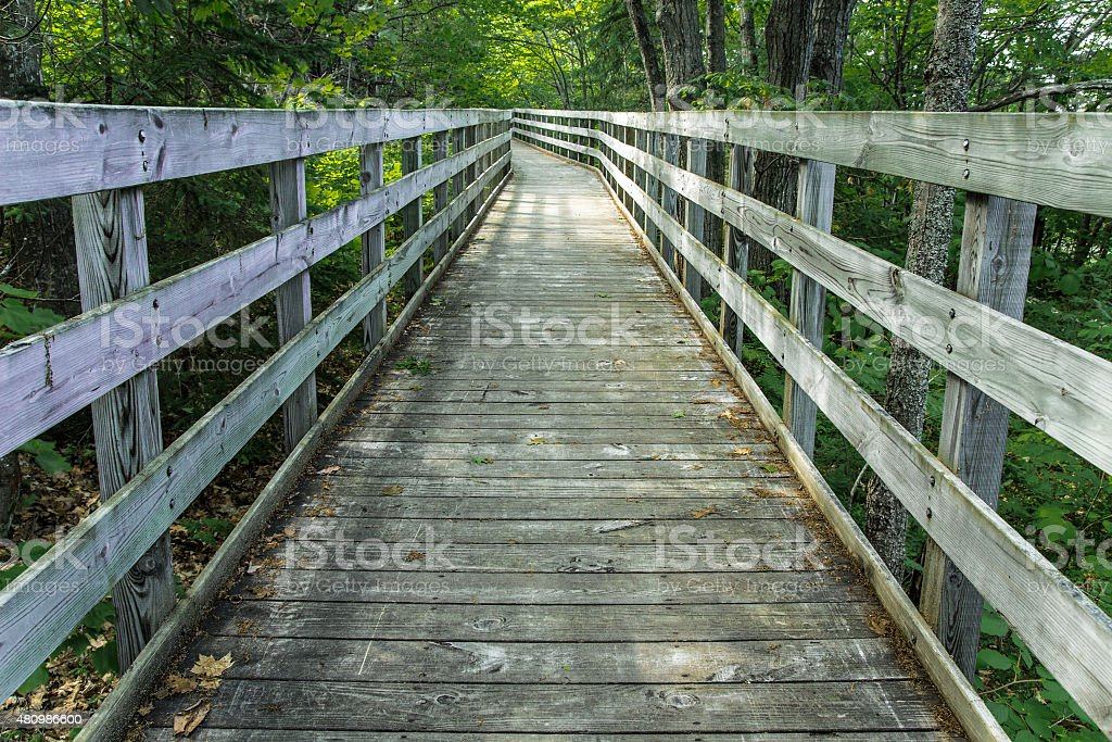 Wooden Boardwalk Winds Through A Peaceful Forest stock photo