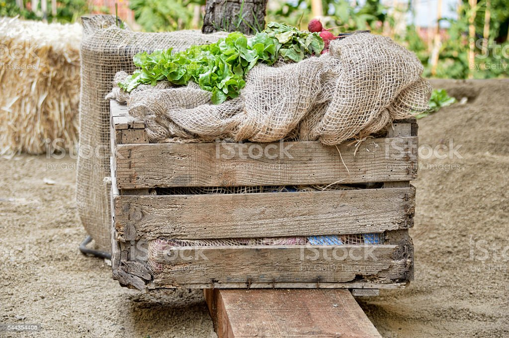 wooden box of vegetables stock photo