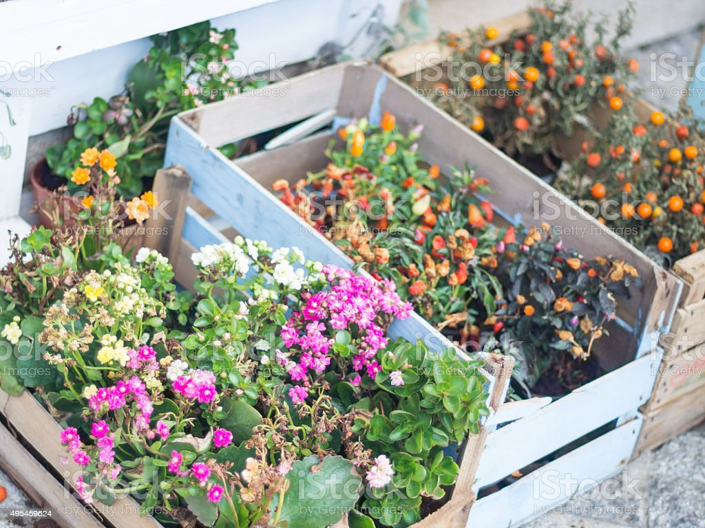 wooden boxes flowers colored stock photo