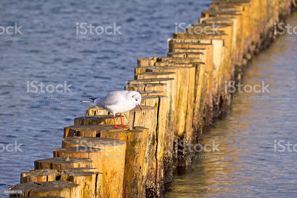 Wooden breakwater at the Baltic Sea stock photo