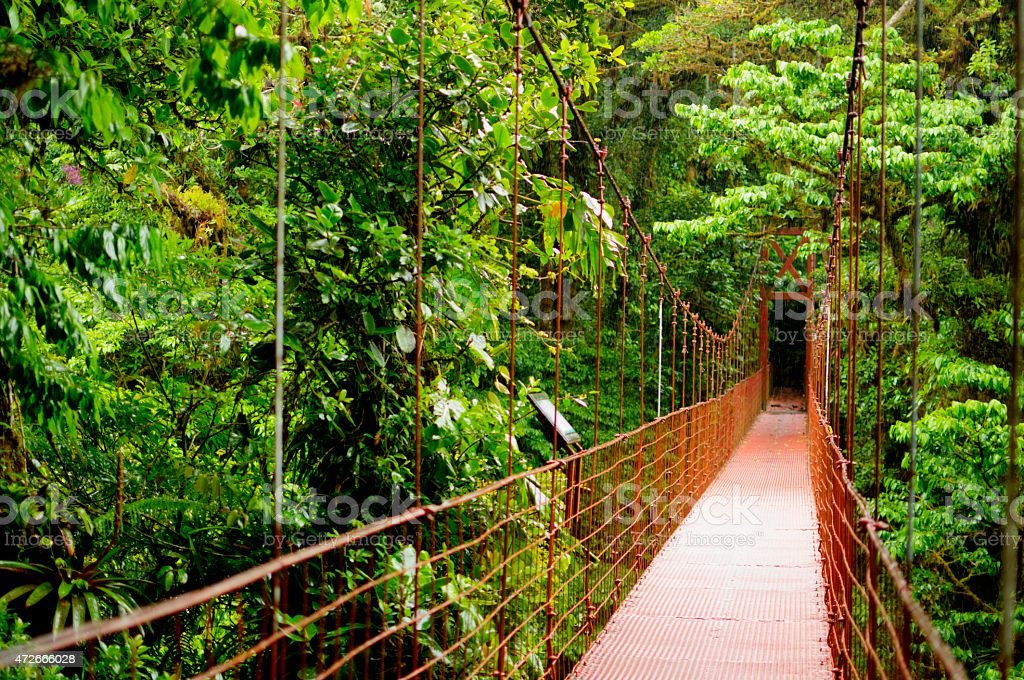A wooden bridge in a forest of Monteverde stock photo