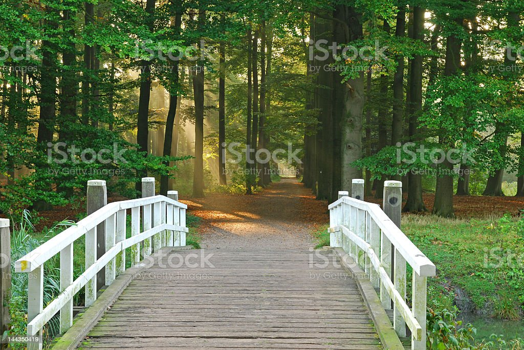 A wooden bridge in a park overlooking trees royalty-free stock photo