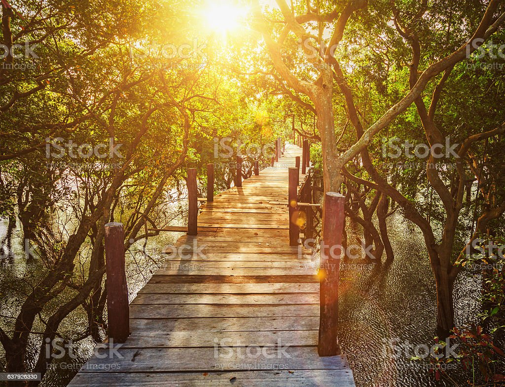 Wooden bridge in flooded rain forest jungle of mangrove trees stock photo