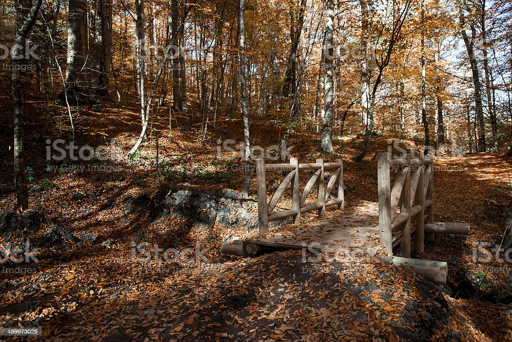 Wooden Bridge in the Forest royalty-free stock photo