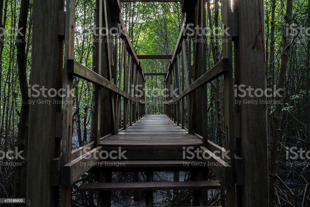 Pont de bois dans la forêt de mangrove photo libre de droits