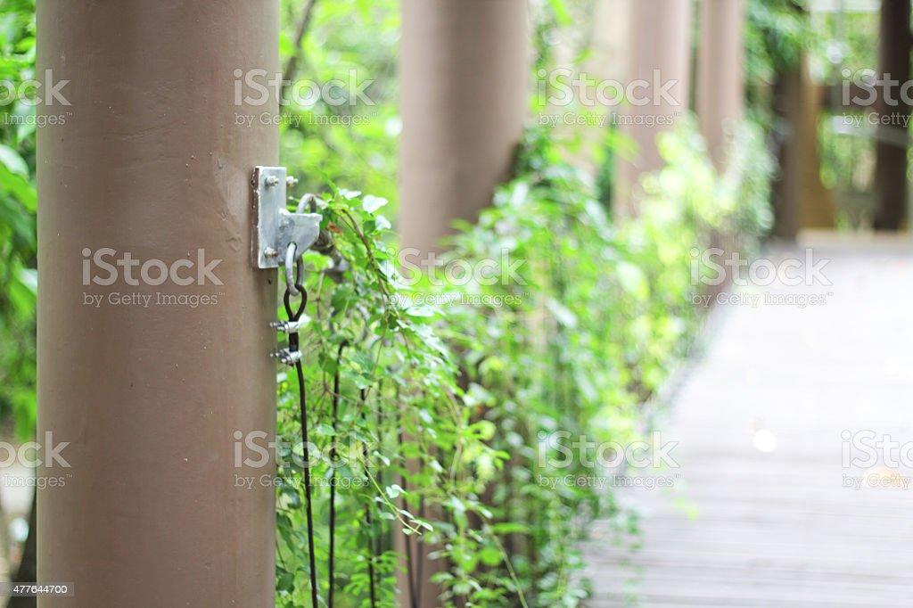 Wooden bridge in tropical rain forest stock photo