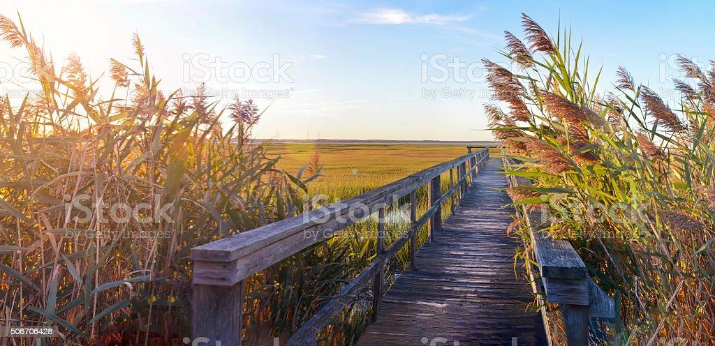 wooden bridge leading into the swamp stock photo