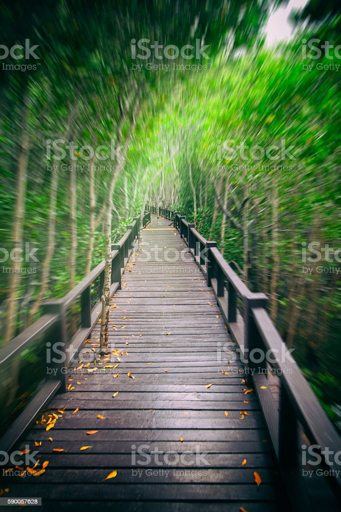 Wooden bridge the forest mangrove motion stock photo